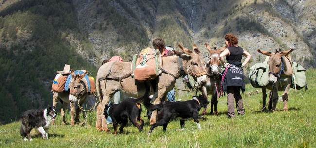 hiking with donkeys ans dogs