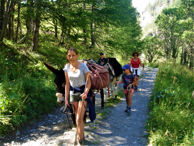 Walk in the pastures of vallon St Martin